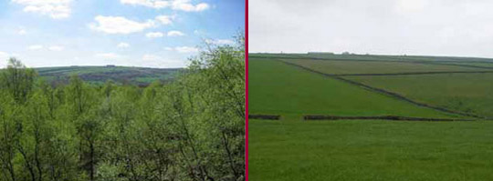 Left: Redmires Wood; Right: Parliamentary Enclosure fields on former Thurlstone Common